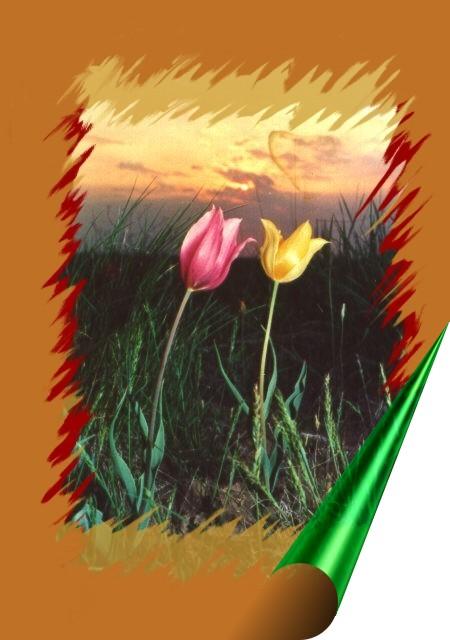 Словарь терминов реликтовые растения